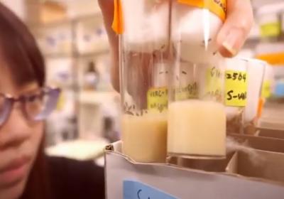 生命科學系在學什麼呢?